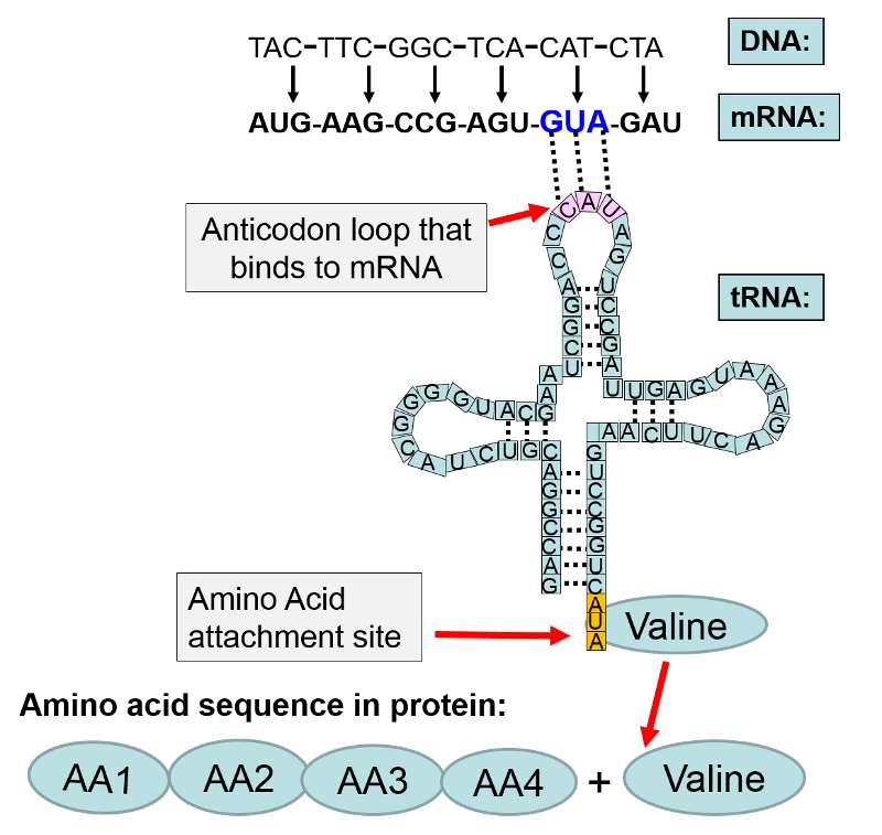 Mrna Link Diagram Electrical Work Wiring Diagram