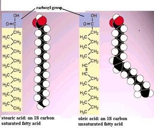 what are cholesterol molecules