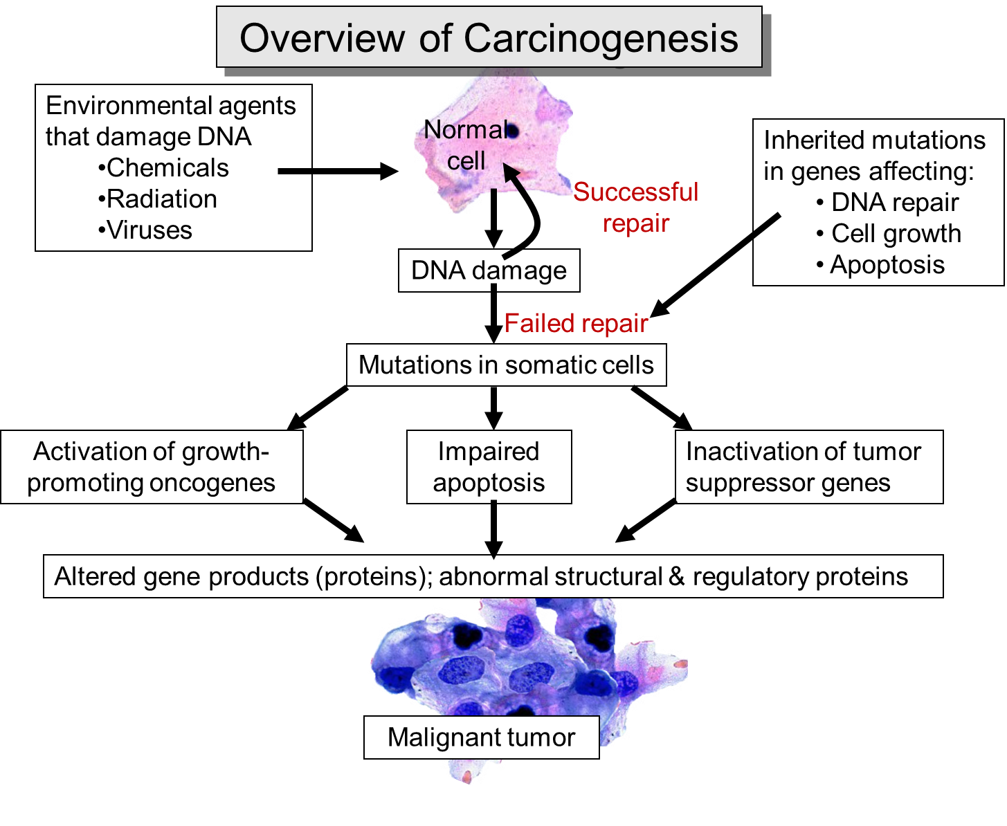 Canceroverview