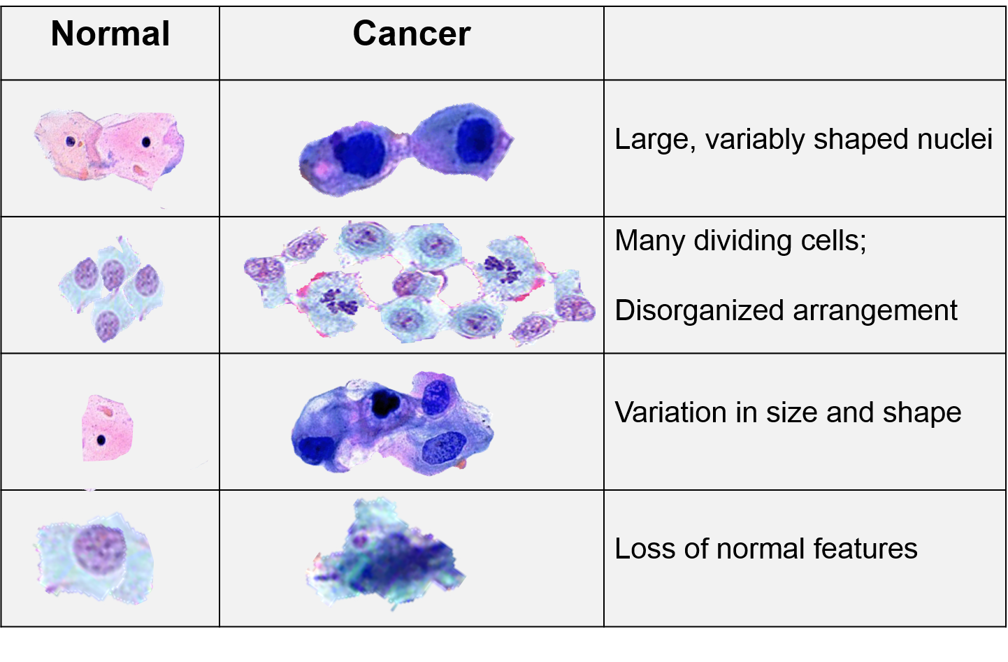 characteristics of cancer cells