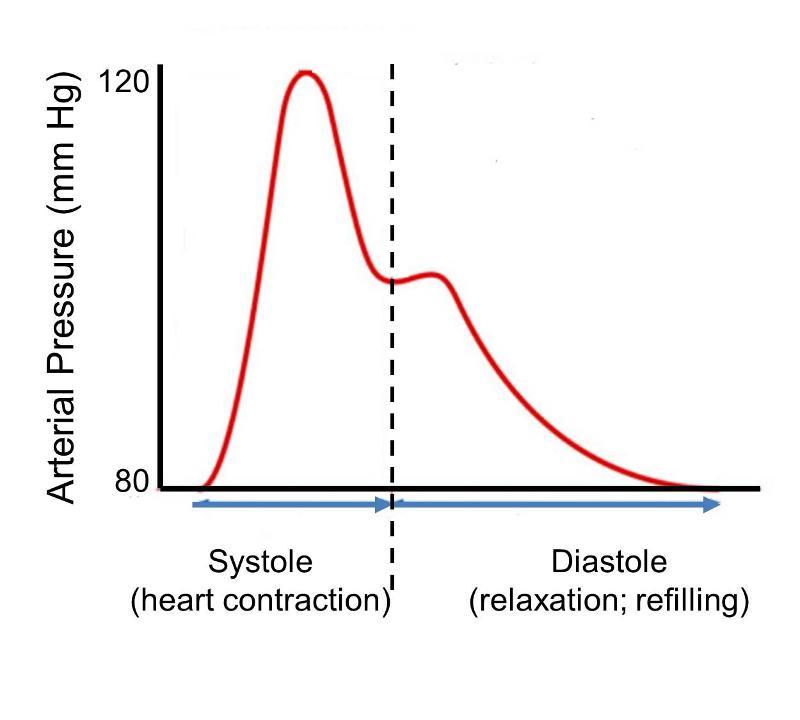 Force Flow Of Blood: Hypertension