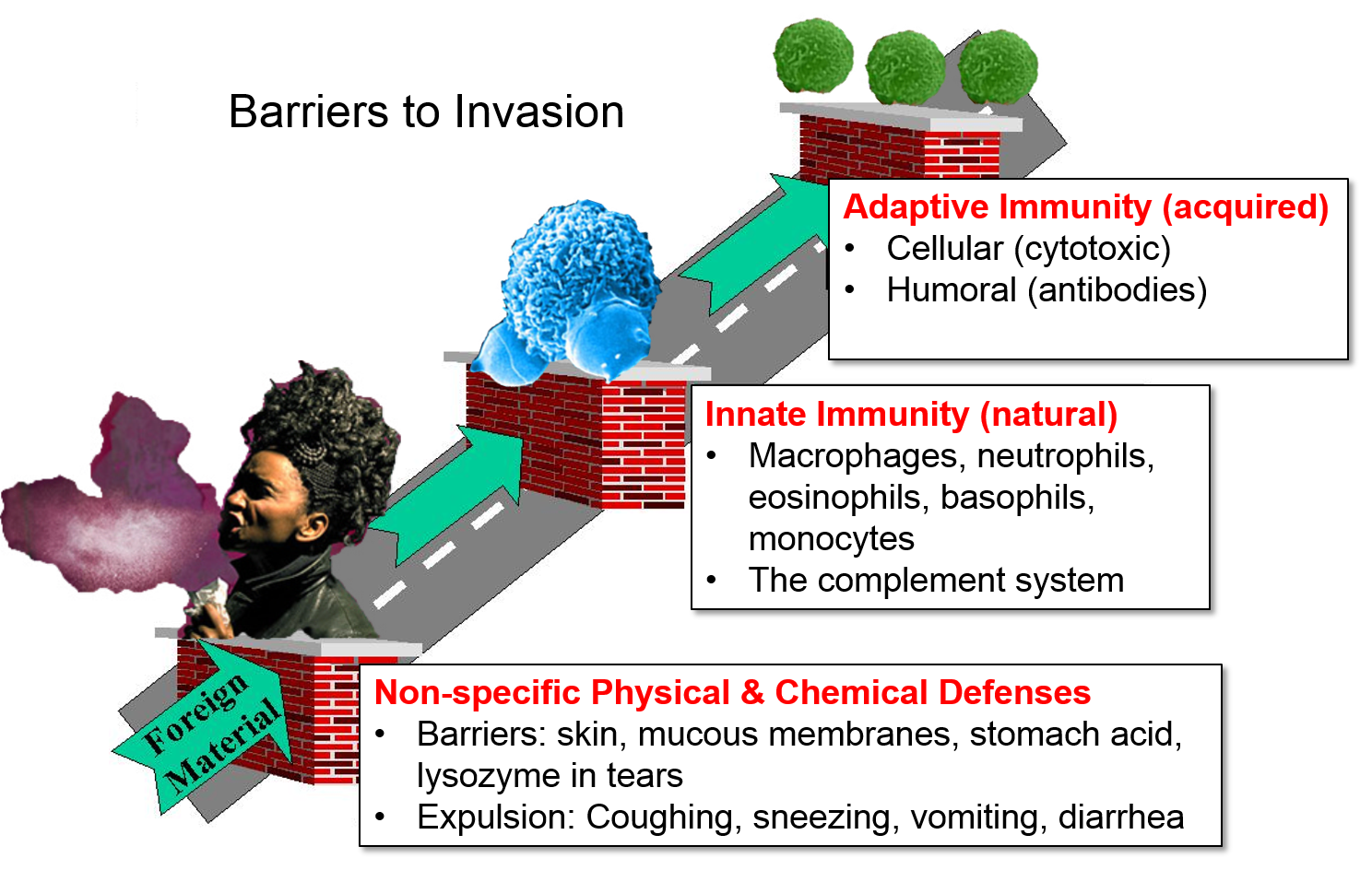 Innate Vs Natural Defenses